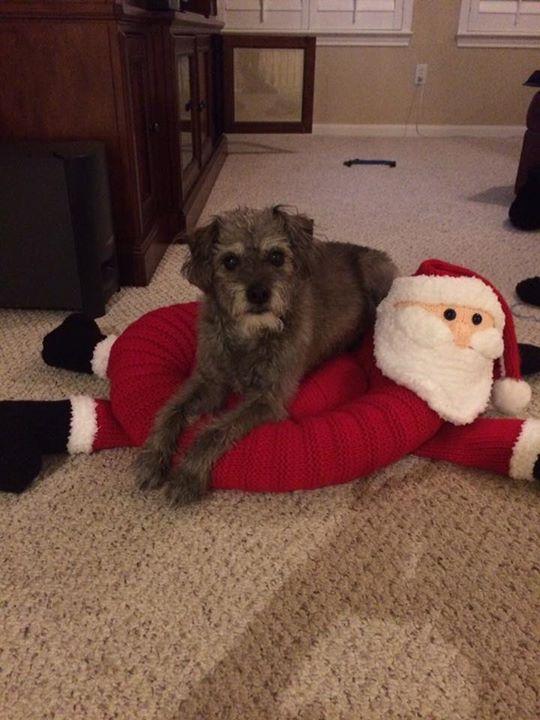 Doggy approved Vicky Gordon lol finally finished my drunken santa