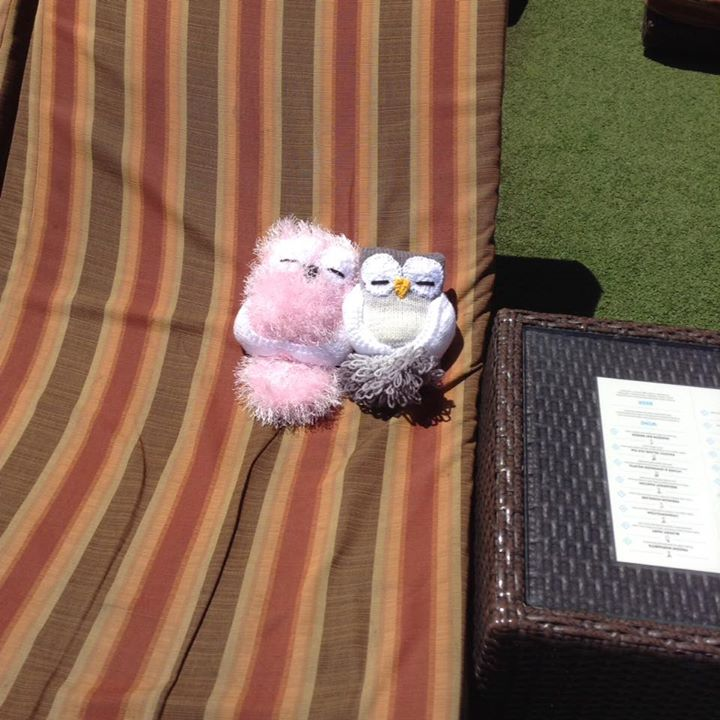 Two owls completed they just having a sun on the deck chair on board Pacific Pearl here in Lifou New Caledonia better get them in before in before the eggs melt